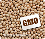 GMO-Sign-Soybeans